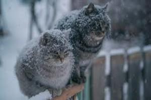 Предстоящей зимой брянцам не стоит ждать сильных морозов