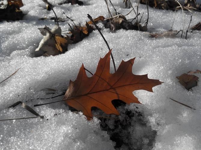 Потеплеет до +4 градусов в последний день зимы на Брянщине