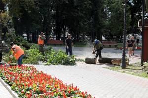 В Брянске сильный ураган повалил дерево на легковушку