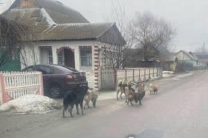 Брянский поселок Большое Полпино захватила стая агрессивных собак