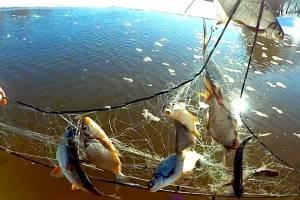 Двое брянцев сетями выловили 75 рыб в период нереста