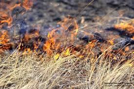 В Брянской области 10 мая горели свалка и сухая трава