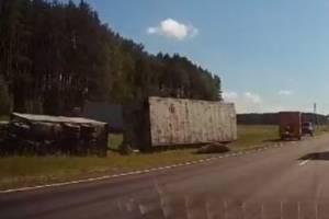 Под Брянском грузовик сбил насмерть лося и перевернулся