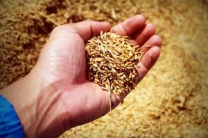 На Брянщине начинающие фермеры получат около 36 миллионов рублей