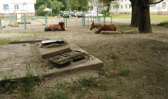 В Брянске лошади захватили детскую площадку на Володарке