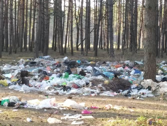 Брянские туристы загадили мусором лес под Нетьинкой