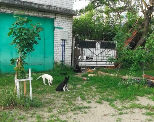 В Брянске пенсионер разводит в своем дворе собак и крыс