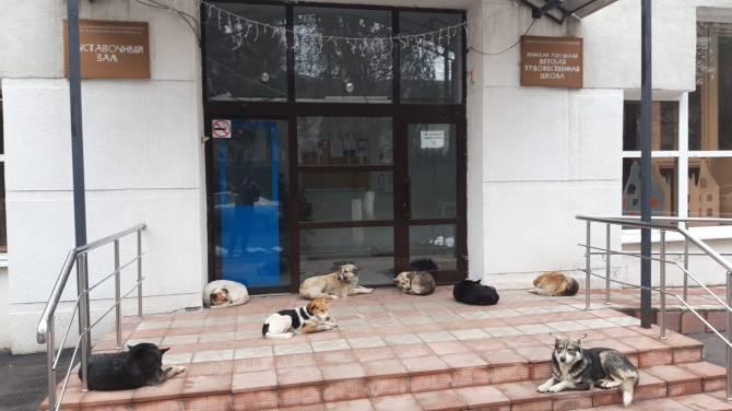 В Брянске собаки захватили вход в детскую художественную школу