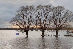 Жителей Рогнединского района забыли предупредить о паводке