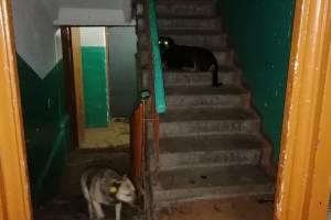 В Брянске бездомные псы оккупировали подъезд многоэтажки на улице Почтовой