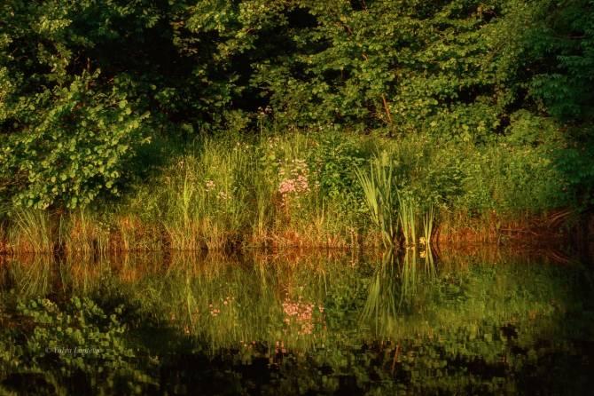 Брянский лес заиграл новыми красками на работах фотохудожницы
