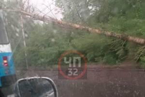 В Брянске возле «Речного» ураган повалил дерево на троллейбусные провода