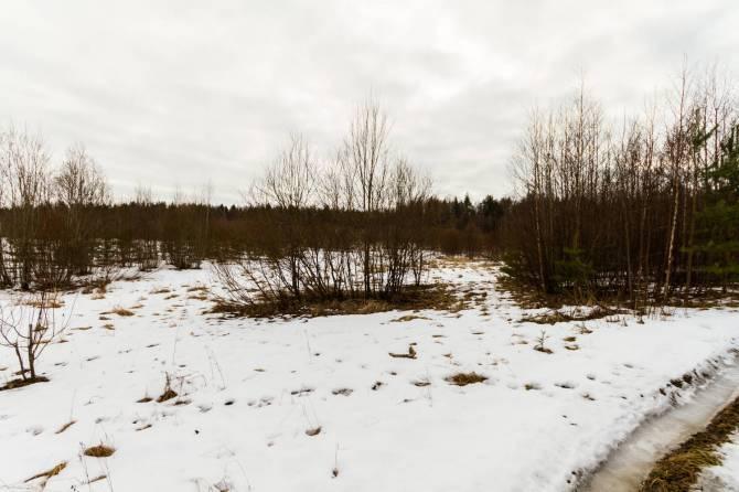 Жительницу Брянской области оштрафовали за зарастающий участок