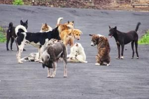 В Брянске жителей улицы Кутузова лишила покоя стая бродячих собак