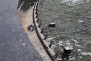 Жители Клинцов пожаловались на мёртвых птиц и грязь в городском фонтане