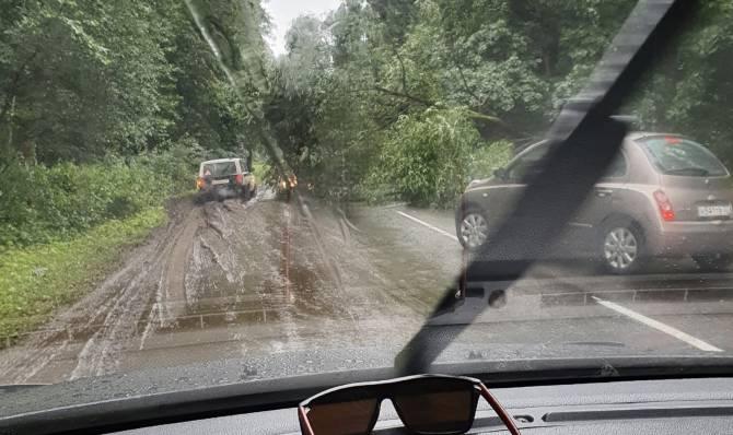 В посёлке Белые Берега упавшее дерево перекрыло дорогу