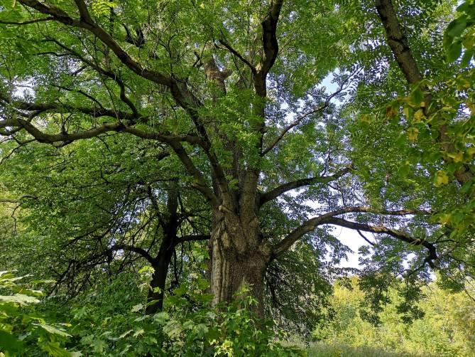 Мало кто знает, но в самом центре Брянска находится памятник природы