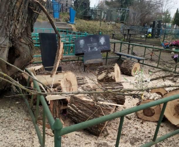 На кладбище в Бежичах рабочие устроили погром при уборке деревьев
