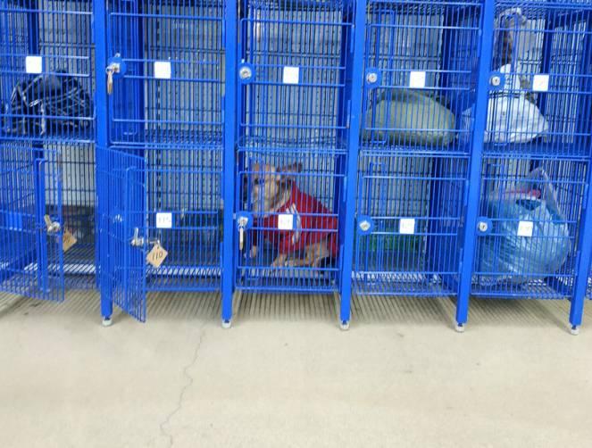 В Брянске заметили собачку в камере хранения в гипермаркете «Линия»