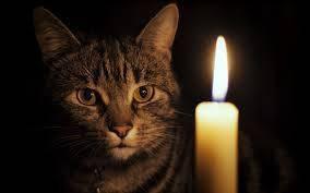 Жителей Новозыбкова предупредили об отключениях электричества