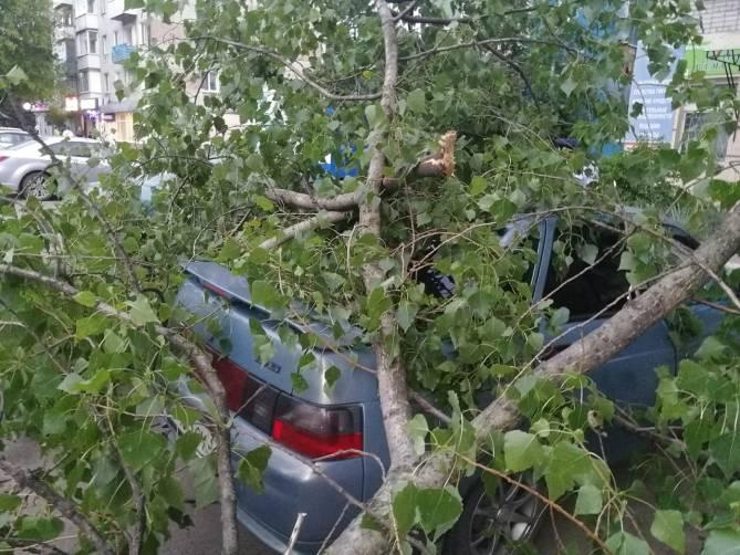 В Брянске на «Мечте» дерево раздавило легковушку