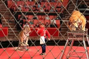 Брянский цирк устроил праздник для сельских детей