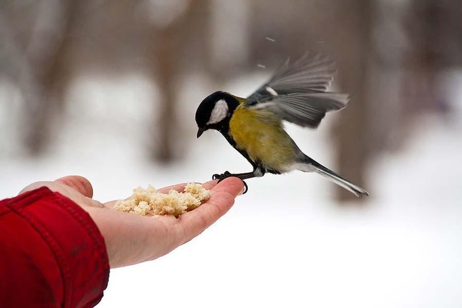 Открытка покорми птиц, сделать открытку ребенку