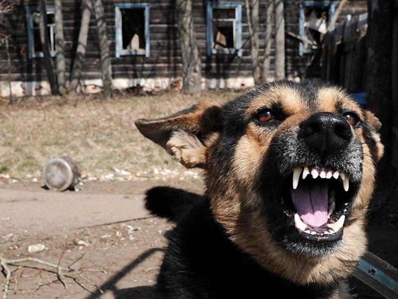 В Володарском районе Брянска появится приют для бездомных животных