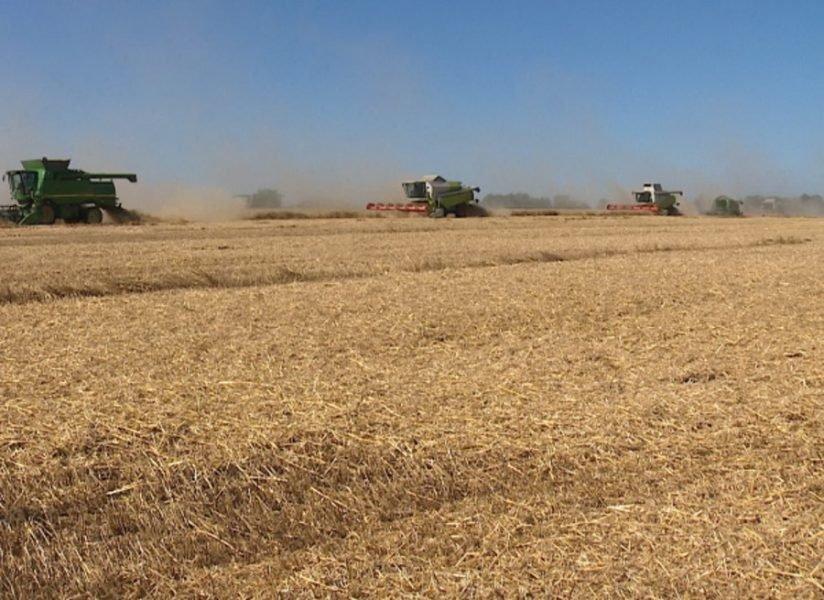 На Брянщине собрали больше половины урожая зерновых