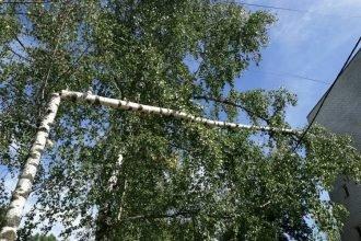 Жителей Брянска напугала висящая на проводах береза на улице Молодой Гвардии