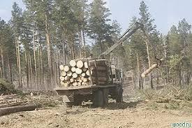 Белорусы тайком ввезли на Брянщину 60 кубов леса
