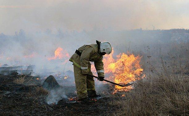 Под Брянском потушили лесной пожар