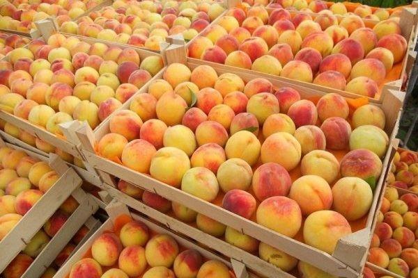 В Брянске нашли пестициды в винограде и персиках