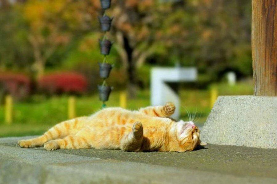 Брянцам 10 сентября обещают 27-градусную жару