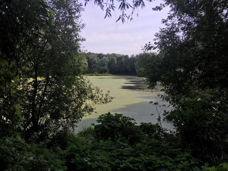 В Клинцах озеро превращается в болото
