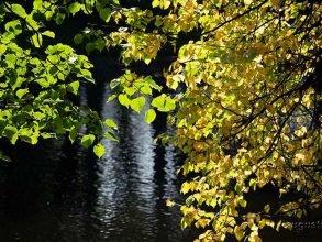 В Брянской области ночью 29 августа похолодает до 3 градусов