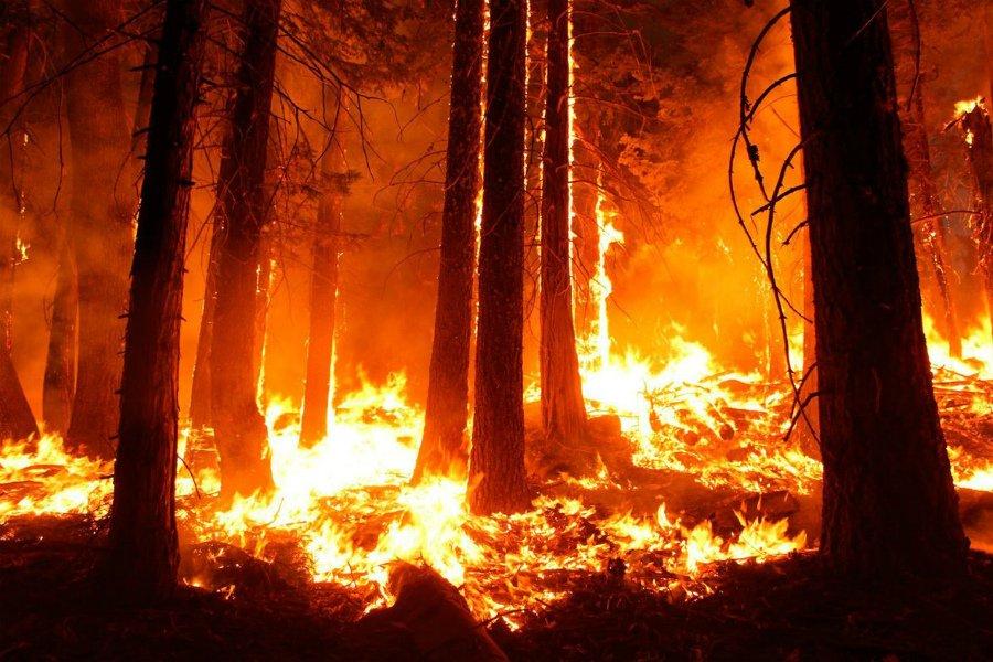 В Карачевском районе три часа тушили лесной пожар