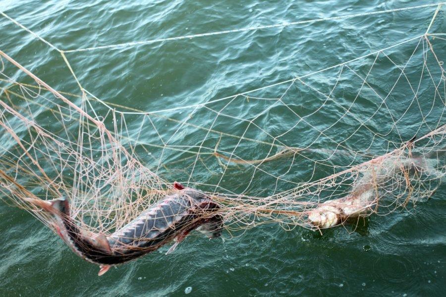 Брянский браконьер заплатит 20 тыс рублей за незаконную рыбалку