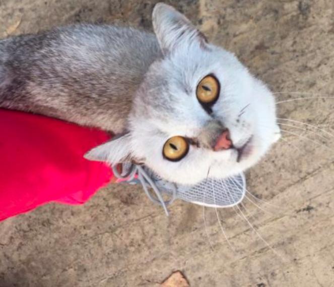 В Новозыбкове неизвестный изверг бросил кота умирать в мешке