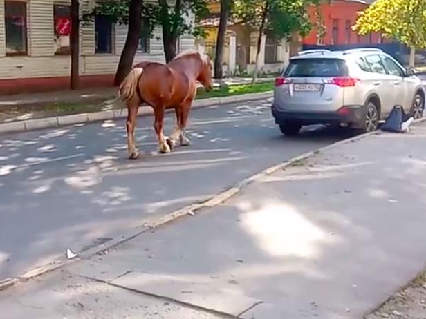 В Брянске сняли на видео будущего «клиента» штрафстоянки для копытных