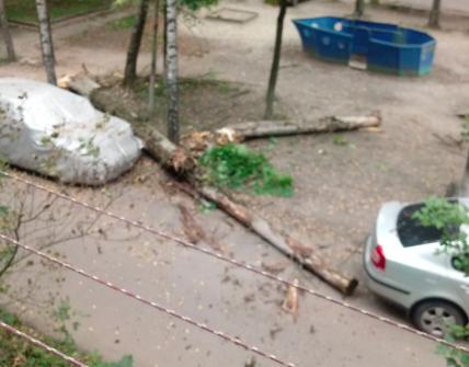 В Брянске на улице Ново-Советской рухнуло дерево