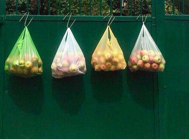 Брянцы позавидовали богатому урожаю яблок в Краснодаре