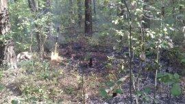 Под Брянском в лесу произошёл пожар