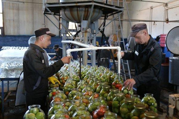 В суражской колонии заключенные консервируют овощи