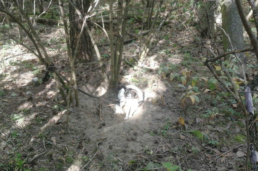 В брянском лесу нашли привязанную к дереву собаку