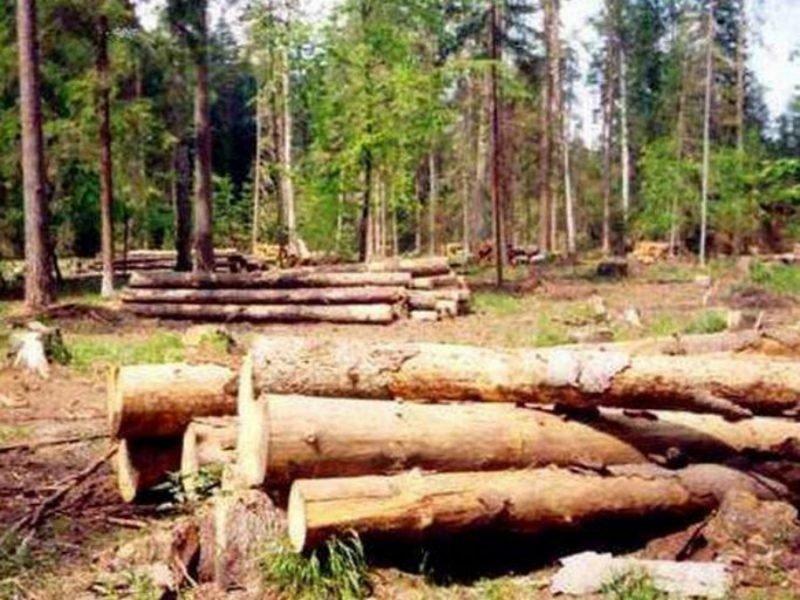 Работника брянской пилорамы оштрафовали за загрязнение леса