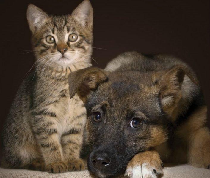 Брянские ветеринары рассказали о важности стерилизации домашних животных