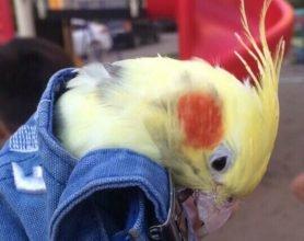 В Брянске на улице Авиационной поймали экзотического попугая