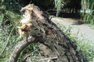 В брянском парке ветка дерева рухнула на годовалую девочку