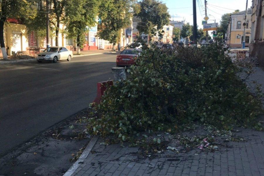 В Брянске на улице Калинина спилили несколько лип